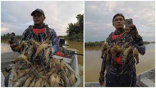 Download Memancing Udang Galah Mega Sungai Muar Video