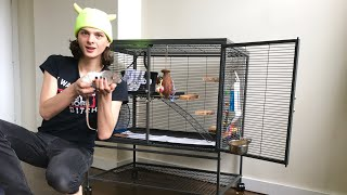 Download New year, new cage for the rats! Video