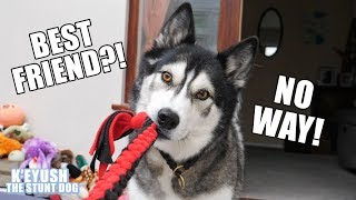 Download Telling My Dog His Best Friend Is Visiting! He's SHOCKED! Video