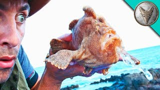 Download MONSTER FROGFISH FOUND! Video