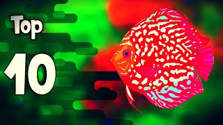 Download 🔴Top 10 peces mas bonitos para acuarios de agua dulce Video