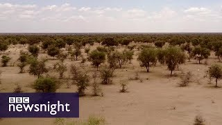 Download The Great Green Wall of Africa: Will it help fight climate change? BBC Newsnight Video