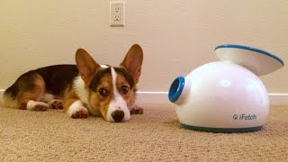 Download CORGI'S CHRISTMAS PRESENT - Life After College: Ep. 385 Video