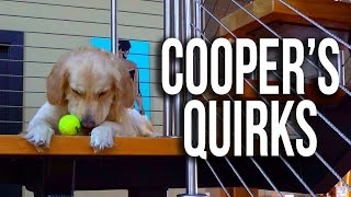 Download Crazy Golden Retriever Habits (Super Cooper Sunday #91) Video
