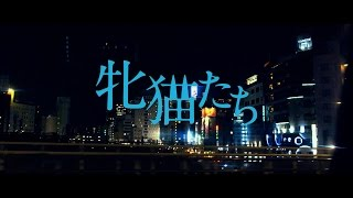 Download 白石和彌監督『牝猫たち』予告編 Video