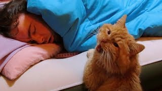 Download Funny Cats Waking up Owner   Cat Alarm Clocks   Top Cats Video Compilation Video