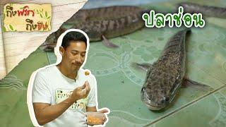 Download ถึงพริกถึงขิง 13-07-18 : ปลาช่อนลอดถ้ำ Video