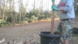 Download composting poop with worms: part 1 Video