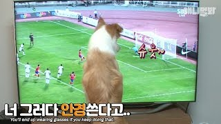 Download 아 안 보인다고..TV 너만 보냐고...ㅣ″Where's the remote?″ Dog that knows how to turn on and watch TV Video