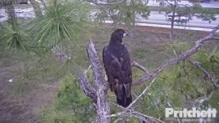 Download SWFL Eagles~ E-9 Branching (Day-2) Dad Demonstrates Video