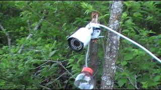 Download My camera setup for Beaver Trapping video - Sends a live video feed to my house. Video