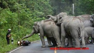 Download The Elephant Story 027: Elephant vs. Big Bike Video