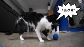 Download The BEST Way to Feed Your Cat Dry Food Video
