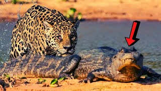 Download CRAZIEST Animal Fights Caught On Camera TOP 10 Video
