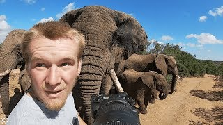Download Photographer captures incredible encounter with a herd of elephants. Video