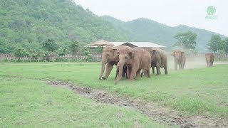 Download Elephants Run To Greeting A New Rescued Baby Elephant Video