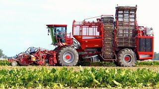 Download HOLMER Exxact T4.30 6-row sugar beet harvester | Suikerbieten rooien | Loonbedrijf Breure Video