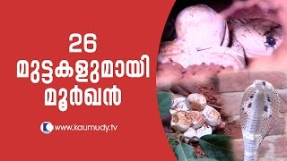 Download Wow ! A Cobra with 26 eggs   Snake Master EP 245   Kaumudy TV Video