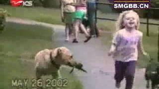 Download The world's most funny dog video Video