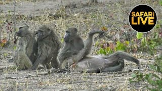 Download safariLIVE - Sunset Safari - July 12, 2019 Video