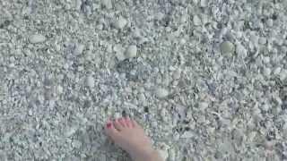 Download How to Find a Sand Dollar on the Gulf Coast of Florida Video
