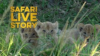 Download The Mystery of the Missing Lion Cub Video