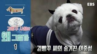 Download 세상에 나쁜 개는 없다 - 김빵구사원이 왜 그럴까 #001 Video