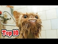Download Top 10 RAREST Cat Breeds Video