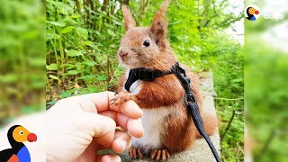 Download Squirrel Who Falls From Roof Finds Dad Who Won't Give Up on Him - TINTIN | The Dodo Video