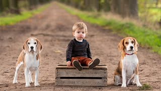 Download BEAGLES and TODDLER LIAM CUTE COMPILATION : Funny Beagles Louie & Marie Video