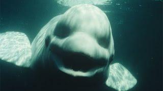 Download 10 STRANGE Deep Sea Photos Explained Video
