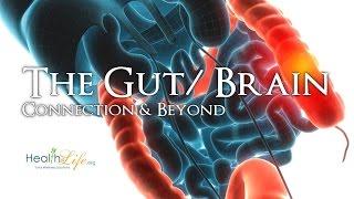 Download ″Of Bowels, Bacteria, & Brains″ (Gut/ Brain Summit #1) Video