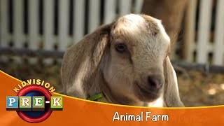 Download KidVision Pre-K Animal Farm Field Trip Video