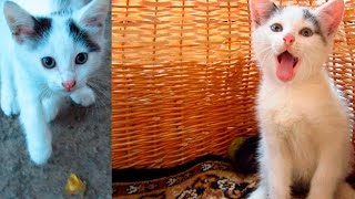 Download Rescue kitten with a broken paw Video