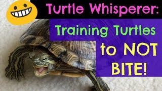 Download Turtle Adventures: Turtle Whisperer - Training Turtles to NOT BITE! Video