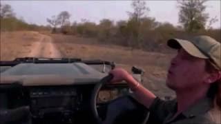 Download Safari Live : Brents terrifying man eating Lion story Aug 20, 2016 Video
