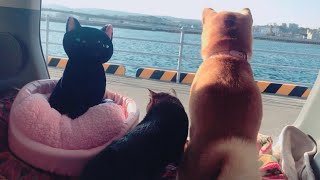 Download 海に興味津々の猫、そうでもない犬 Cat looked at the sea curiously Video