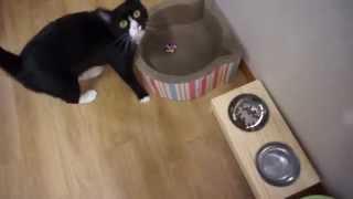 Download 쉬바 고양이 주식파우치 참치와 연어 Video