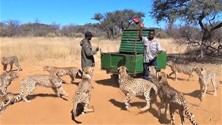 Download Mass Feeding Animals all at Once - Modern Farming Technology Video