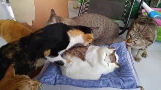 Download Fake Feline Friend Video