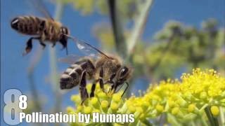 Download Top 10 Things That Would Happen if BEES DIED OUT Video