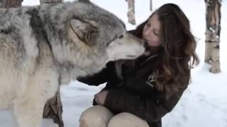 Download Colorado Wolf and peoples Wildlife Center Video