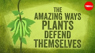 Download The amazing ways plants defend themselves - Valentin Hammoudi Video