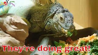 Download Studio & Reptile Update Video