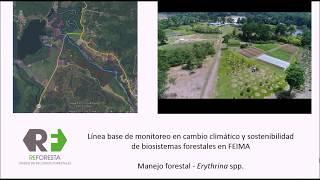 Download Silvicultura y Manejo Forestal Video