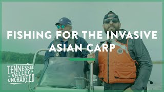 Download Fishing for and Researching the Invasive Asian Carp on Kentucky Lake - Tennessee Valley Uncharted Video