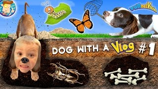 Download Dog with a VLOG #1! Rose & Chase the Dirt Diggers / Bug Catching Fun! (FUNnel Vision Doggy Vloggy) Video