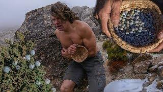 Download Harvesting Juniper Berries in Freezing Cold Desert Video