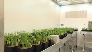 Download Aralab - FitoClima HP - High Performance Plant Growth chambers and Controlled Environment rooms Video