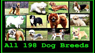 Download All Dog Breeds In The World (A to Z) Video